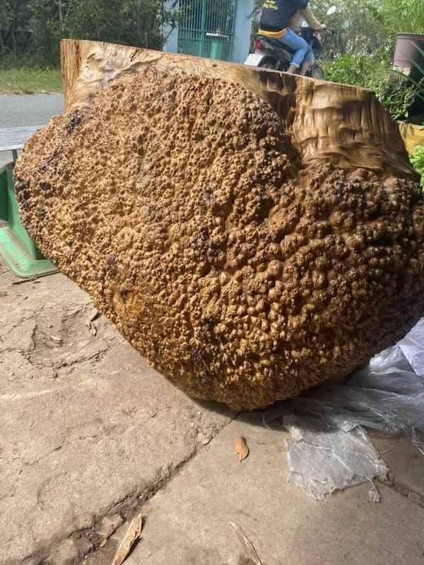 phôi gỗ nu hương giá trị cao