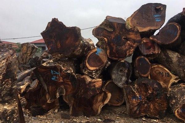 cây gỗ tròn me tây